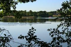 Achtundzwanzig Gänse, die in einer Reihe schwimmen Lizenzfreie Stockfotos