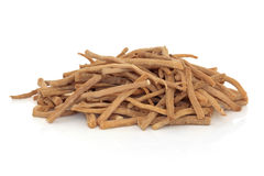Achyranthes Root Herb Royalty Free Stock Image