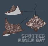Łaciasta Eagle Ray kreskówki wektoru ilustracja Zdjęcie Royalty Free
