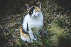 Łaciasty kota dopatrywanie Obrazy Royalty Free