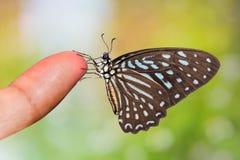 Łaciasty zebra motyl Obrazy Royalty Free