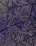 Acid Crystals Pattern Royalty Free Stock Photo