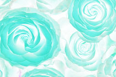Acid roses bouquet. Abstract Royalty Free Stock Photography