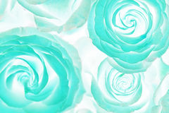 Acid roses bouquet. Abstract Royalty Free Stock Images