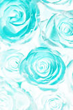 Acid roses bouquet. Abstract Stock Photos