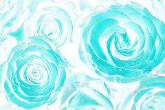 Acid roses bouquet. Abstract Stock Photography