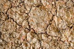 Acid sulfate soils surface Royalty Free Stock Photo