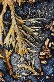 Acide ascorbique et alun de potassium Photos stock