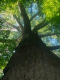 Acima da árvore Fotos de Stock