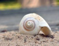 Acima da concha do mar próxima na areia imagem de stock royalty free