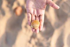 Acima da ideia da mão nova da mulher branca que guarda a concha do mar no Sandy Beach no por do sol Imagens de Stock