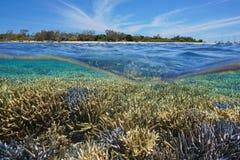 Acima da ilha abaixo Nova Caledônia do recife de corais da água Fotografia de Stock