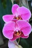 Acima da orquídea próxima na natureza imagens de stock