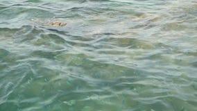Acima da superfície rippling azul clara transparente do mar com recife de corais abaixo em um dia de verão Escola de tropical exó video estoque