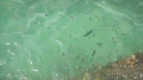 Acima da superfície rippling azul clara transparente do mar com recife de corais abaixo em um dia de verão Escola de tropical exó filme