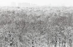 Acima da vista da floresta bloqueado pela neve e de construções urbanas Imagem de Stock