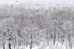 Acima da vista da floresta bloqueado pela neve no inverno Imagem de Stock Royalty Free