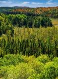 Acima das árvores em Autumn Forest - vertical Fotografia de Stock Royalty Free
