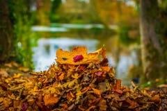 Acima das folhas de outono macro próximas fotos de stock royalty free