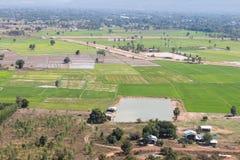Acima das plantas de arroz verdes residenciais Imagem de Stock Royalty Free