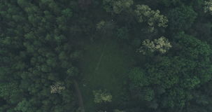 Acima de Forest Trees Cinematic vídeos de arquivo