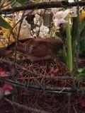 Acima de próximo e de pessoal com um pássaro Fotos de Stock