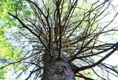 Acima de uma árvore Fotos de Stock