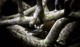 Acima de uma árvore Imagens de Stock