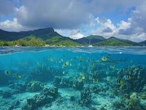 Acima e abaixo da superfície Polinésia francesa do mar fotografia de stock royalty free