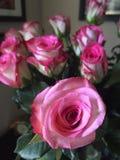 Acima-fim da flor Fotos de Stock Royalty Free
