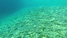 Acima-fim do recife em Grécia 8 vídeos de arquivo