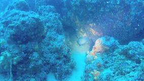 Acima-fim do recife em Grécia 10 ST vídeos de arquivo