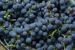 Acini d'uva in secchio Fotografie Stock
