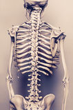 Ack of human skeleton model - aged effect Royalty Free Stock Images