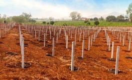 Ackerbau für Drachefrüchte an der Plantage Stockbild