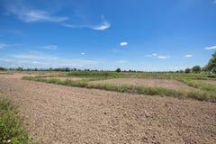 Ackerbaureisreisfeld und grünes Gras mit Hintergrund des blauen Himmels in der Spottschrift Thailand am Mittag beleuchten Stockfoto