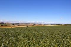 Ackerbohnen in Yorkshire Lizenzfreie Stockbilder