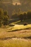 Ackerland in Äthiopien Stockbild
