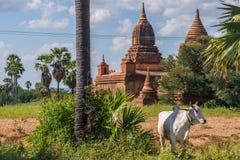 Ackerland in altem Bagan Stockfoto