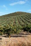 Ackerland, Andalusien Lizenzfreie Stockfotografie