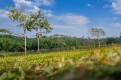 Ackerland auf Hügel mit dem Bambuszaun mit Baum- und Himmelhintergrund Lizenzfreies Stockbild
