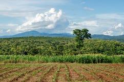 Ackerland auf Hochebene in Chiang Rai, Thailand Stockfoto