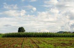 Ackerland auf Hochebene in Chiang Rai, Thailand Lizenzfreie Stockfotografie
