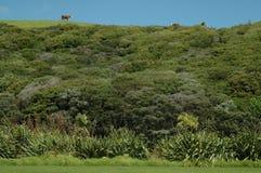 Ackerland auf Nordinsel, Neuseeland Stockbild