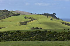 Ackerland auf Nordinsel von Neuseeland Stockfoto
