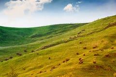 Ackerland in Australien Stockfoto