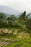 Ackerland Balis, Indonesien. Lizenzfreies Stockfoto