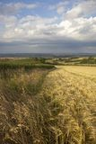 Ackerland bei Lark Stoke, Cotswolds Lizenzfreies Stockfoto