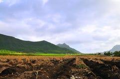 Ackerland bei Mauritius Stockbilder