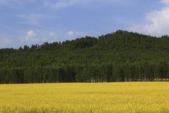 Ackerland, Berge, Wald, der Himmel Stockbild